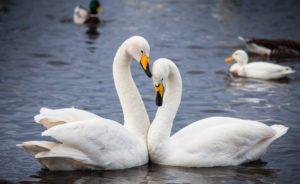 Wild Coast and Winter Swans Workshop