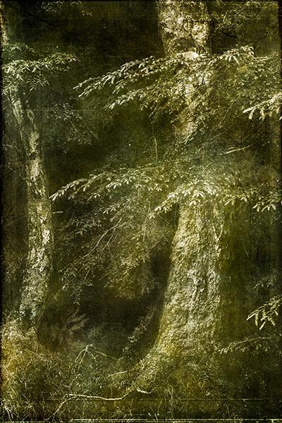 woodlandaf12