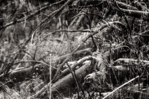 Moss Erotica Monochrome