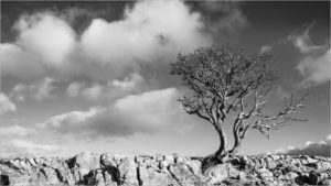 99 Trees